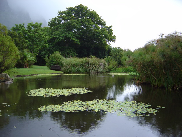 Ботанические сады Кирстенбош (Kirstenbosch Botanical Gardens)