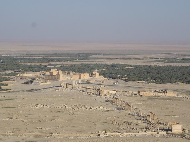 Palmira (1)