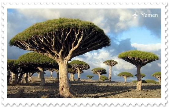 Удивительный мир архипелага Сокотра