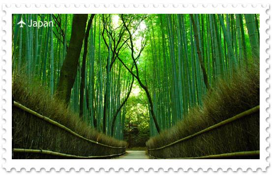 Бамбуковая роща в Киото