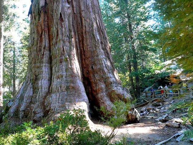 Национальный парк Секвойя. США
