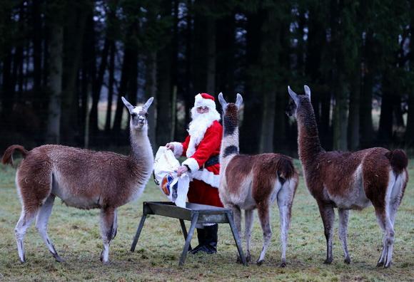Рождество в мире. 2012