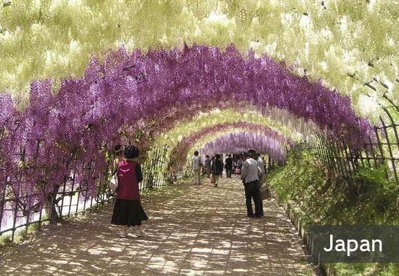 Необыкновенный сад Кавачи Фудзи