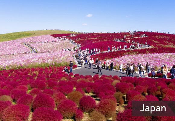 Цветочный парк Хитачи Кайхин