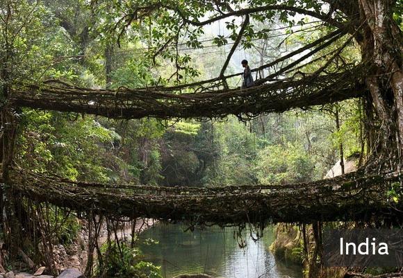 Удивительные мосты из корней