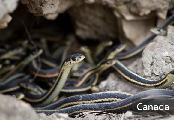 Змеиные ямы Нарсисса