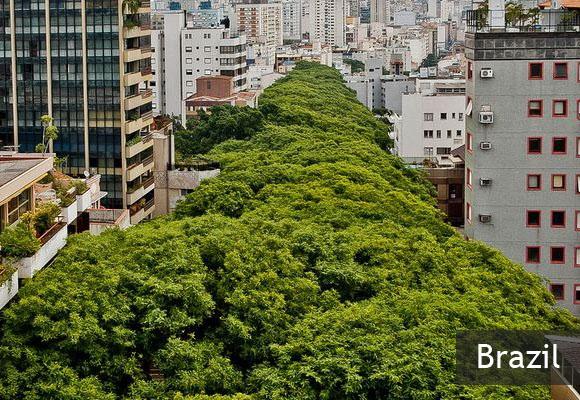 Руа-Гонсалу-де-Карвальо — самая зеленая улица в мире